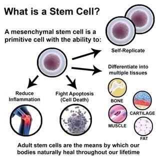 Services | Pain Management, Neurology, Stem Cell | Relievus