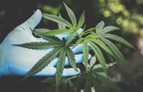 cannabis-freshness-hand-2178565
